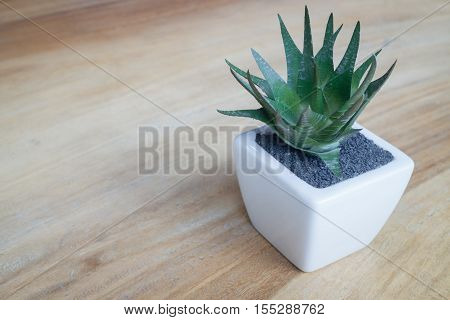 Mini plant pot on wooden table stock photo