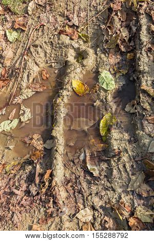 Puddle of mud with tire track texture and fallen leaves