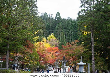 WAKAYAMA JAPAN - OCTOBER 28: Autumn Okunoin Cemetery in Wakayama Japan on October 28 2016. Okunoin is one of the most sacred places in Japan and a popular pilgrimage spot.