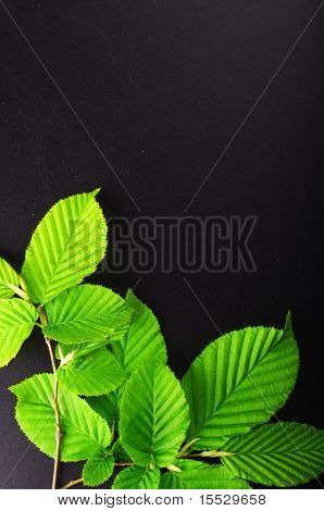 Leaves And Copyspace