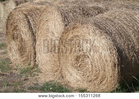 detail of bales of hay in a farm
