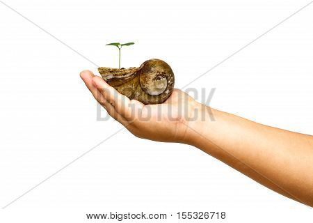Child Hand Holding Crust Shellfish With Young Green Plant