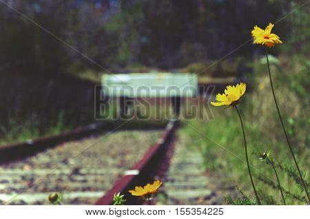 Flowers and weeds at the end of an abandoned old railway line. Selective focus, retro toned.