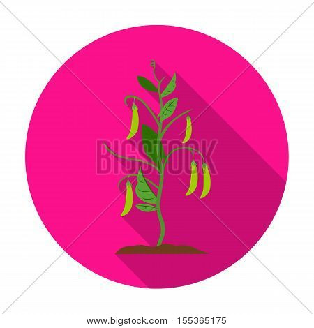 Peas icon in flat style isolated on white background. Plant symbol vector illustration.