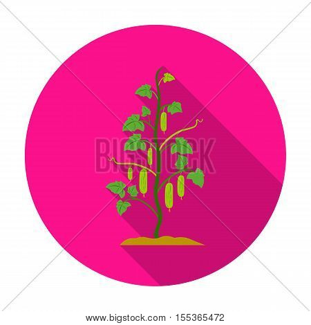 Cucumber icon in flat style isolated on white background. Plant symbol vector illustration.