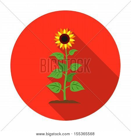 Sunflower icon in flat style isolated on white background. Plant symbol vector illustration.