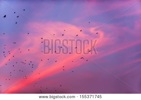 Birds are flying somewhere in the sunset