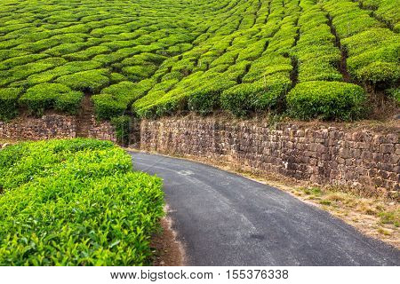Empty road through tea plantations in Munnar, India