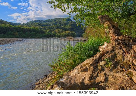 Snag on the shore of a mountain river. A view of the river and mountains.