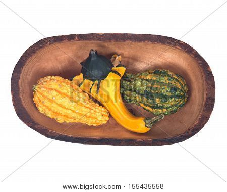 Amish farm colorful pumpkin in olive wood bowl isolated on white background