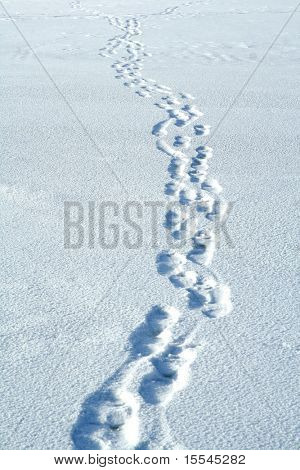 Traces on snow. Winter path