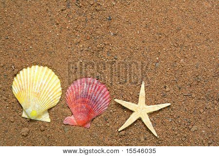 summer concept. seashells and star on sand background