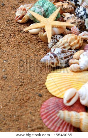 seashells frame on sand background with focus on star
