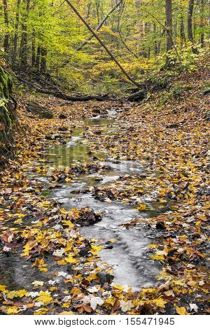 A small creek flows through an Indiana woodland painted in autumn colors.