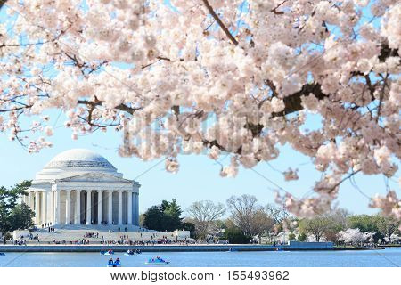 Dawn at the Jefferson Memorial during the Cherry Blossom Festival. Washington DC