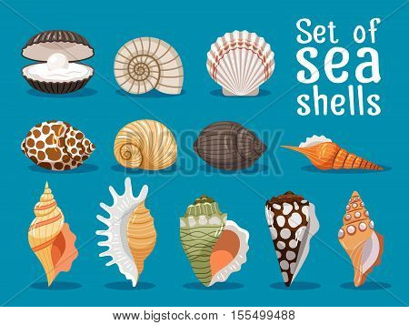 Sea shells isolated on blue background. Seashell set vector illustration for your sea design
