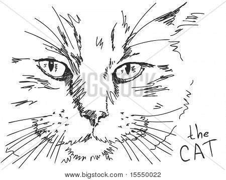 Hand drawn cat. Visit my portfolio for big collection of doodles