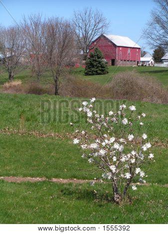 Primavera na fazenda