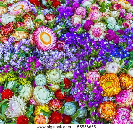 Field wild spring flowers, colorful natural background