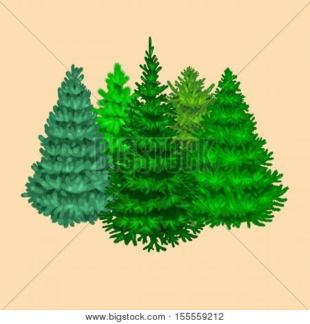 Set of christmas vector tree like fir or pine Blue spruce for New year celebration without holiday decoration, evergreen xmas plants.