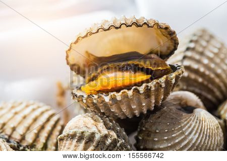 Delicious Boiled Or Steamed Cockles(scallop Seafood) Food Background Or Manu. Shellfish Smile. Small