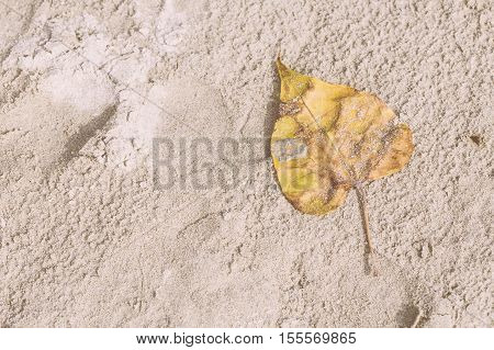 White Sand And Yellow Dry Leaf On The Beach At Noon For Vacation To Relax Background. Vintage Tone.