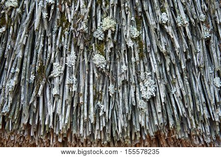A fragment of the old thatched roof. Straw covered with moss and lichen. Texture background