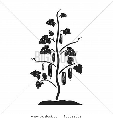 Cucumber icon in black style isolated on white background. Plant symbol vector illustration.
