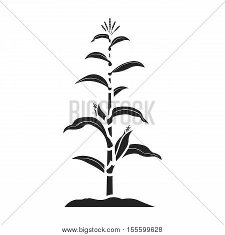 Corn icon in black style isolated on white background. Plant symbol vector illustration.