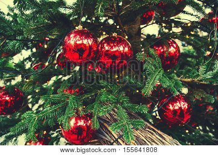 Christmas red balls hanging on a Christmas tree. Christmas tree background with copy space. Christmas in Europe. Outdoor Christmas decorations.