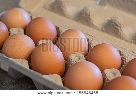Close-up image of eggs in carton package