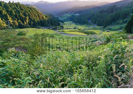 Japanese Rural Scene Of Rice Terraces And Wild Grass On Sunset