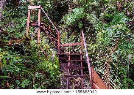 Wooden Stairway On Hike In Bako National Park