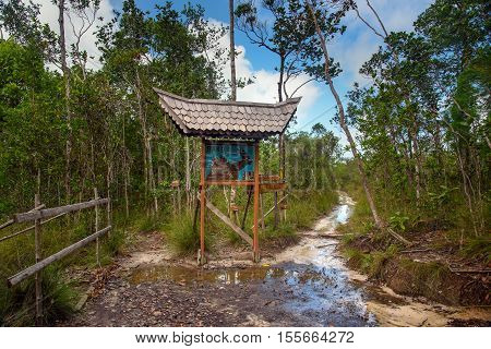 Pointer In Bako National Park