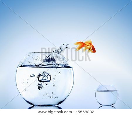 Goldfish jumping from the aquarium. Escape.