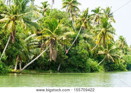 Jungle of Kerala backwaters - a chain of brackish lagoons and lakes lying parallel to the Arabian Sea coast in Kerala southern India