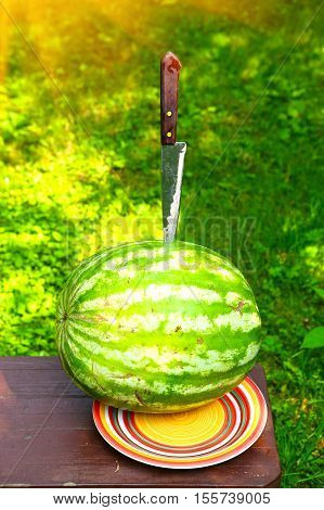 whole water melon with knife on the summer garden background