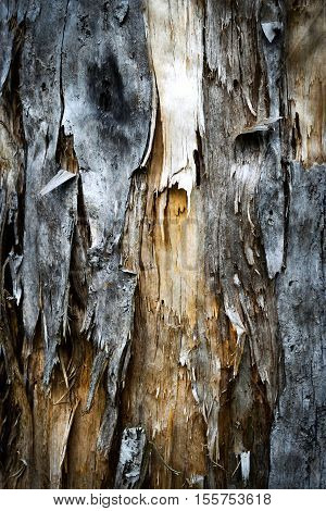 abstract background or texture frayed old weathered wood