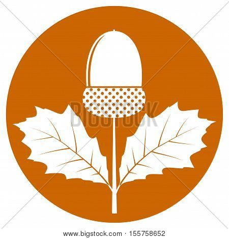 vector acorn with leaves isolated on orange round