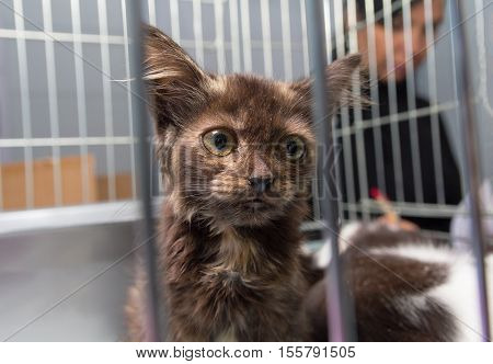 Homeless kitten sitting in a cage at the shelter. Pets