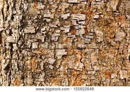 Bark Tree Texture for background ,Bark Tree Texture background