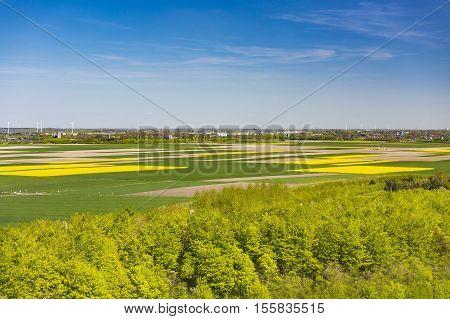 Rape Fields And Wind Turbines View