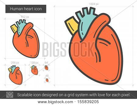 Human heart vector line icon isolated on white background. Human heart line icon for infographic, website or app. Scalable icon designed on a grid system.