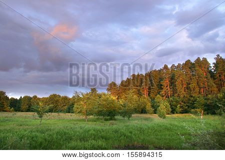 Beautiful Sunset In A Field Near The Forest