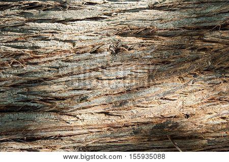 Texture Of Tree Bark. Background