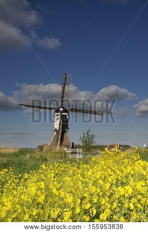 Flowering rapeseed in front of the Broekmolen windmill near Streefkerk in the Dutch region Alblasserwaard