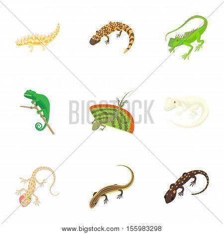 Iguana icons set. Cartoon illustration of 9 iguana vector icons for web