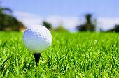 stock photo of ball chain  - golf ball on the bright green grass  - JPG