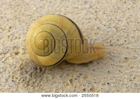 Snail plodding along on a summer day.
