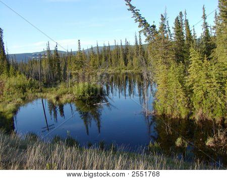 Alaska Beaver Pond